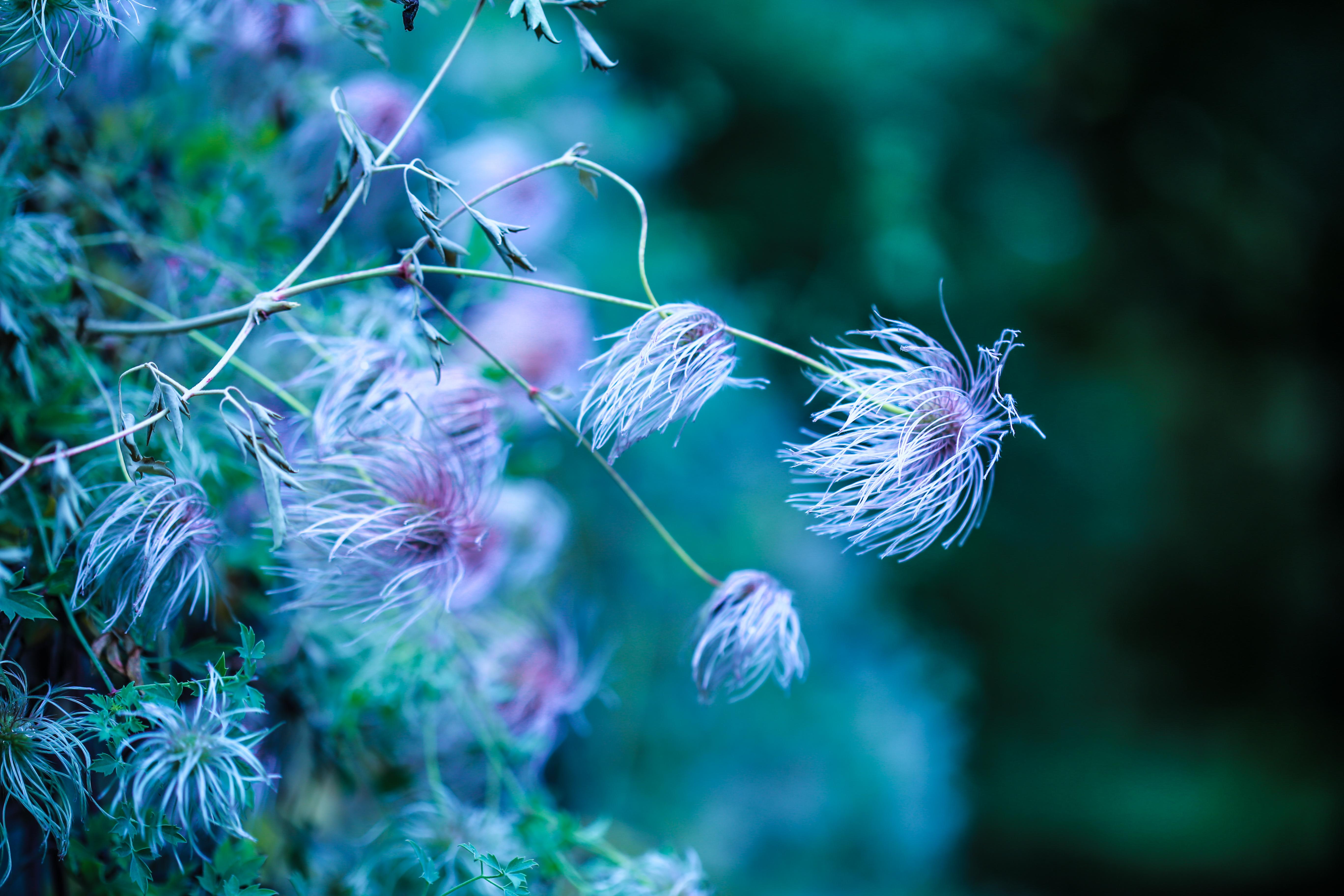 fleurja2