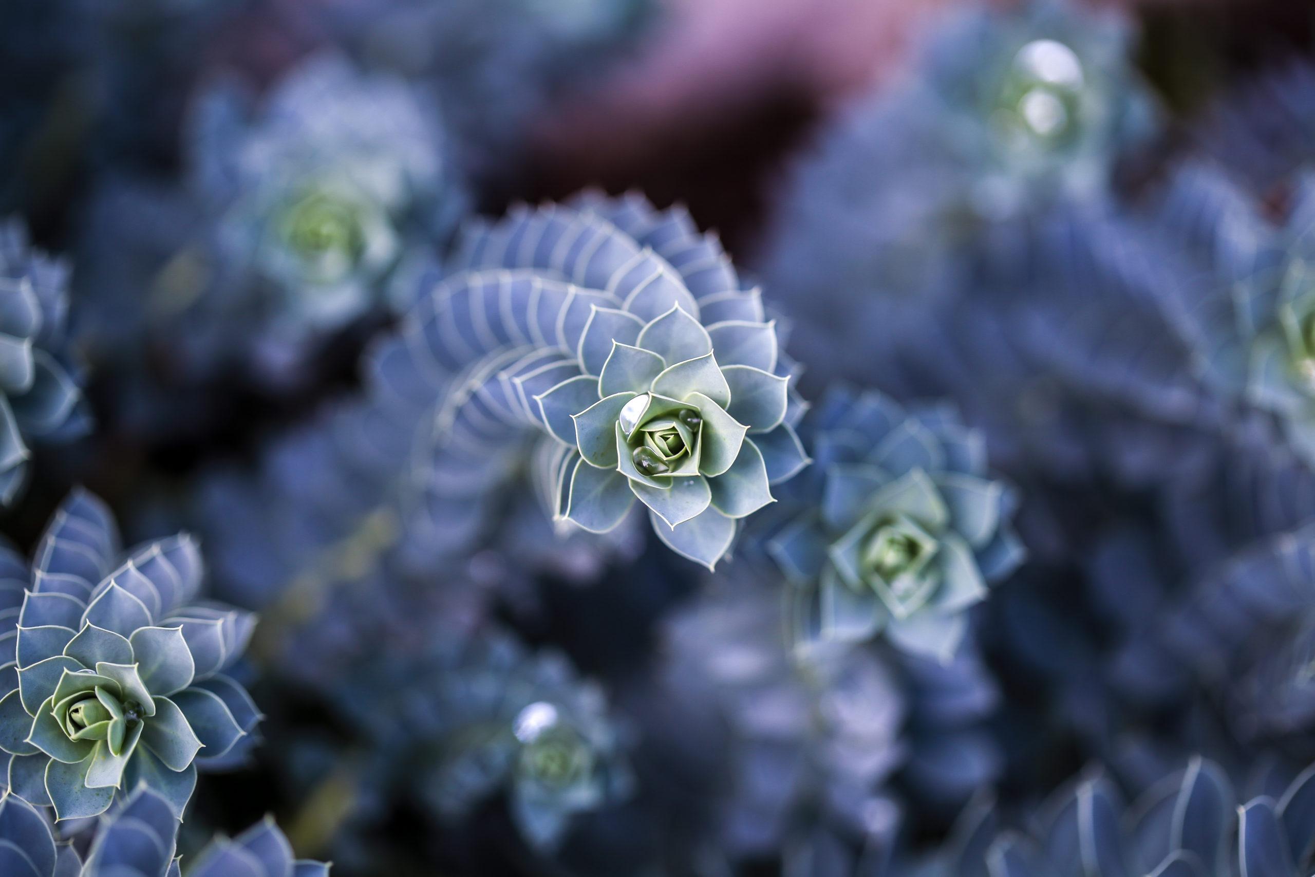 fleurja35