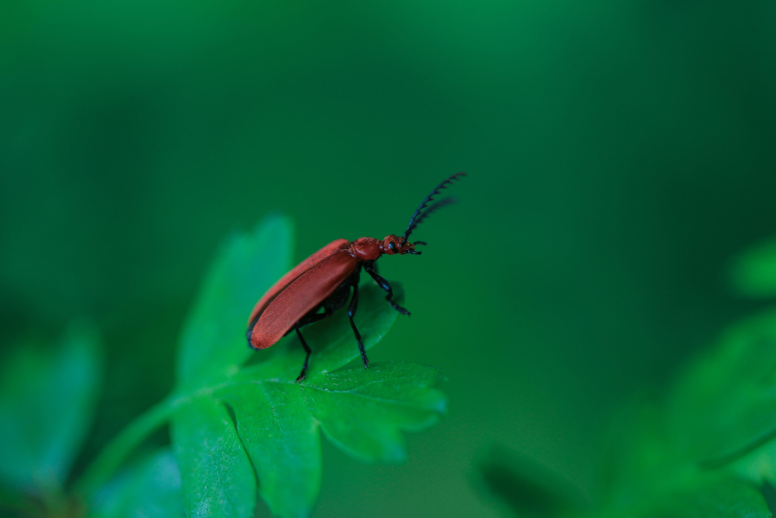 insect3